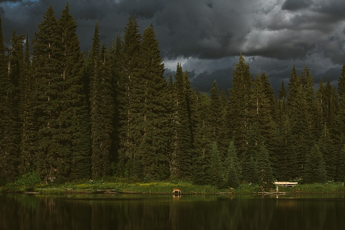 Landscape beauty of Canadian Rockies, a deer in wild nature, stormy skies,